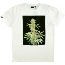 T-shirt Space Monkeys - Bud Crew Neck Tee - White